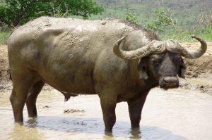 Addo Elefant Nationalpark