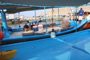 1/2 Tages Dhow Cruise mit Delfinsichtung