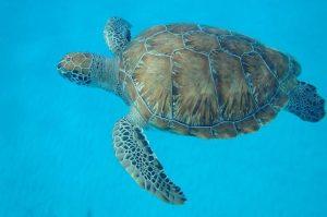 Katamaran und Schildkröten