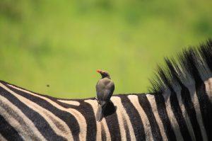 Safari & Raubvogel-Reha Zentrum