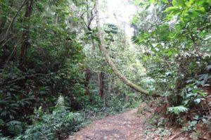 Regenwald Tour