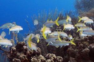 Ausflug zum Bucco Riff