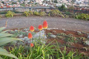 Citytour Funchal